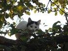Фотография в Кошки и котята Продажа кошек и котят Отдадим котят в любящие руки бесплатно. Родились в Москве 1