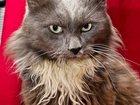 Изображение в Кошки и котята Продажа кошек и котят Кот давно ждет своего хозяина, никому не в Москве 0