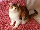 Изображение в Кошки и котята Продажа кошек и котят Знакомьтесь! Ответственная кошка Маняша! в Москве 0