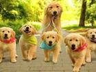 Фото в   Опытный инструктор по вязке собак. Опыт работы в Москве 2000