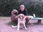 Смотреть foto  Дрессировка собак в Москве 34134395 в Москве