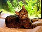 Фото в   Эта милая котодевочка мечтает о том, чтобы в Москве 0