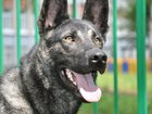 Изображение в   Ищем нового и надежного хозяина для собаки в Москве 0