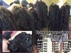 Увидеть фотографию  Куплю перевернутые волосы 34525860 в Москве
