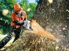Изображение в Услуги компаний и частных лиц Разные услуги Компания Арбористик выполнит валку деревьев в Москве 100