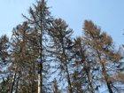 Фото в Услуги компаний и частных лиц Разные услуги Удаление деревьев профессиональными арбористами в Москве 99