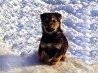 Фото в   Умилительный медвежонок, очень скромный и в Москве 0