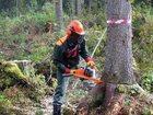 Изображение в   профессиональная работа с деревьями. Выполнение в Москве 1000