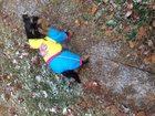 Изображение в Собаки и щенки Вязка собак Темпераментный парень, возраст 2 года , вес в Москве 0