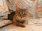Скачать бесплатно фотографию  Умный котенок Дизель ищет дом, 34979566 в Москве