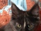 Фотография в   Скромный и обаятельный котенок (девочка) в Москве 0