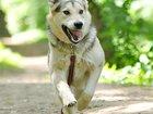 Скачать foto  Лотта - молодая, активная собака ищет дом, 35112918 в Москве