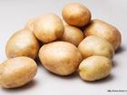 Просмотреть изображение  Картофель 3,5+, некондиция, нестандарт 35310599 в Иваново