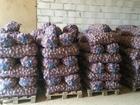Скачать бесплатно фото Разное Картофель Рэд Скарлетт оптом от 20 тн, хорошо сохранился 35351173 в Калуге