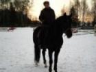 Изображение в Недвижимость Аренда жилья Конно-спортивная школа Шамиран приглашает в Москве 2000
