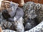 Изображение в   Три очаровательные девочки ищут дом. Сестренкам в Москве 0