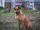 Фотография в   Смышленые щенята живут совсем рядом. Мальчику в Москве 0
