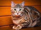 Фотография в   Карамелька была веселым котенком-подростком в Москве 0
