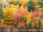 Фотография в   Профессиональная работа с деревьями. Выполнение в Краснознаменске 500