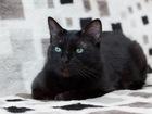 Фотография в   Розочка уже очень много пережила: это кошка в Москве 0