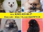 Изображение в Собаки и щенки Продажа собак, щенков По минимальным ценам продам хороших чистокровных в Москве 8500