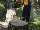 Фото в Строительство и ремонт Другие строительные услуги Выполняем работы:   -Спил деревьев  - кронирование в Красногорске 600