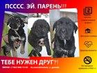Фото в   Если вы начали читать это объявление- значит в Москве 0