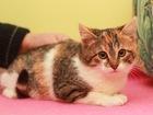 Фотография в Кошки и котята Продажа кошек и котят Мечтаете, что б в Вашем доме появилась ласковая в Москве 0