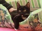 Фотография в Кошки и котята Продажа кошек и котят Знакомьтесь, дружелюбный, коммуникабельный, в Москве 0