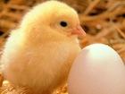 Увидеть foto  Инкубатор для яиц 38225440 в Белгороде