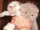 Фото в Кошки и котята Продажа кошек и котят Котятки мечтают о новом доме и стать по- в Москве 0