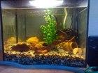 Фото в Рыбки (Аквариумистика) Купить аквариум Породам аквариум со всем содержимым размеры в Москве 3500