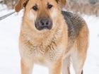 Изображение в   Пуша- собака с большим любящим сердцем, очень в Москве 0