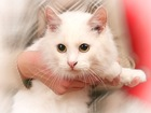 Фотография в   Кошка Снежка активна и любознательна. Нет, в Москве 0