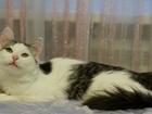 Фотография в   Ей всего 5мес, она пушистая бело-серая кошка, в Москве 0