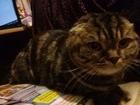 Скачать изображение Услуги для животных Домашняя передержка кошек, Возьму Вашего кота\кошку на майские праздники 38975870 в Москве