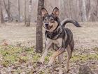 Фото в   Шикарный пёс Рон ищет семью, дабы охранять в Москве 0