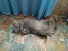 Фотография в   Отдам даром в добрые руки кошечку стерелизованную в Москве 10