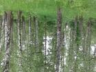Свежее фото  продаю лесн зем уч 39538114 в Чехове-1