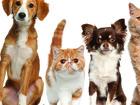 Скачать бесплатно foto Ветеринарные клиники Ветеринар к Вам на дом по Москве и области 39713675 в Москве
