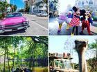 Скачать фото  Пальмовые каникулы в Майами - Пляжи, Диснейленд, Хэллоуин, Вечеринки, Шопинг, 39717997 в Москве