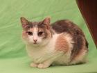 Увидеть foto  Трехцветная кошечка Зайка в дар, в добрые руки, 39735102 в Москве