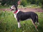 Скачать бесплатно изображение  Умнейшая собака в добрые руки, в дар 39793298 в Москве