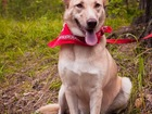 Новое foto  Красивая собака Нора в дар, в добрые руки, 39821429 в Москве