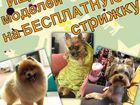 Скачать бесплатно foto  Профессия Грумер, Обучение - груминг собак и кошек, Стрижка, Триминг 39876195 в Москве