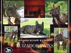 Просмотреть фотографию Собаки и щенки Французский бульдог кобель для вязки 39935689 в Москве