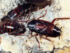 Скачать бесплатно фото Разное Выведение (травля) насекомых, Дезинсекция муравьев, тараканов, блох, постельных клопов, 40038538 в Москве