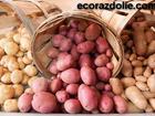 Смотреть фотографию  Картофель от производителя урожая 2017 года, 40713585 в Клине