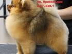 Увидеть foto Услуги для животных Стрижка собак в Москве, Зоосалон Бишон, 43680252 в Москве