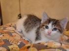 Свежее изображение  Василиса, Вася, маленькая кошечка 2-2,5 мес, 46370439 в Москве
